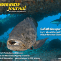 Underwater Journal #31